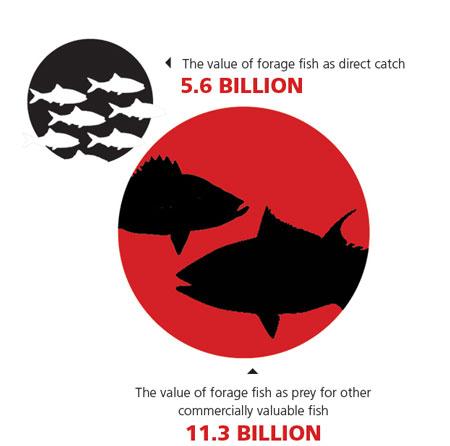 fish-infographic