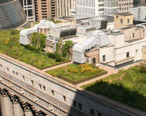 Rooftop garden, Chicago city hall.