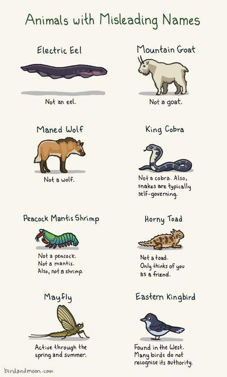 Pronunciation Of Latin Names Scientific Marine Life 119