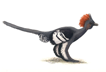 Anchiornis huxleyi in full feather (Illustration:  Michael DiGiorgio)