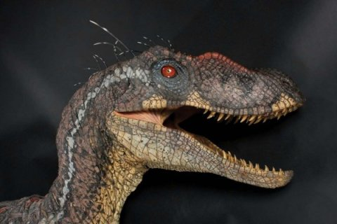 A Hollywood velociraptor