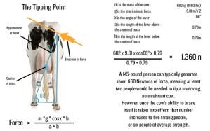 cow_2663043b