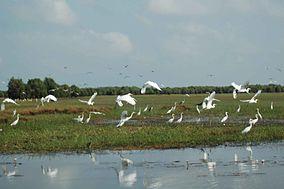 Egrets in Tràm Chim National Park, Vietnam Mekong Delta