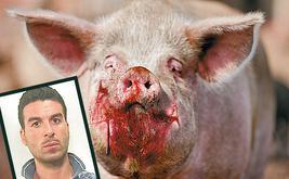 swinie-zjadly-zywcem-szefa-mafii_17757643
