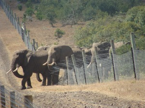 Elephant breakout