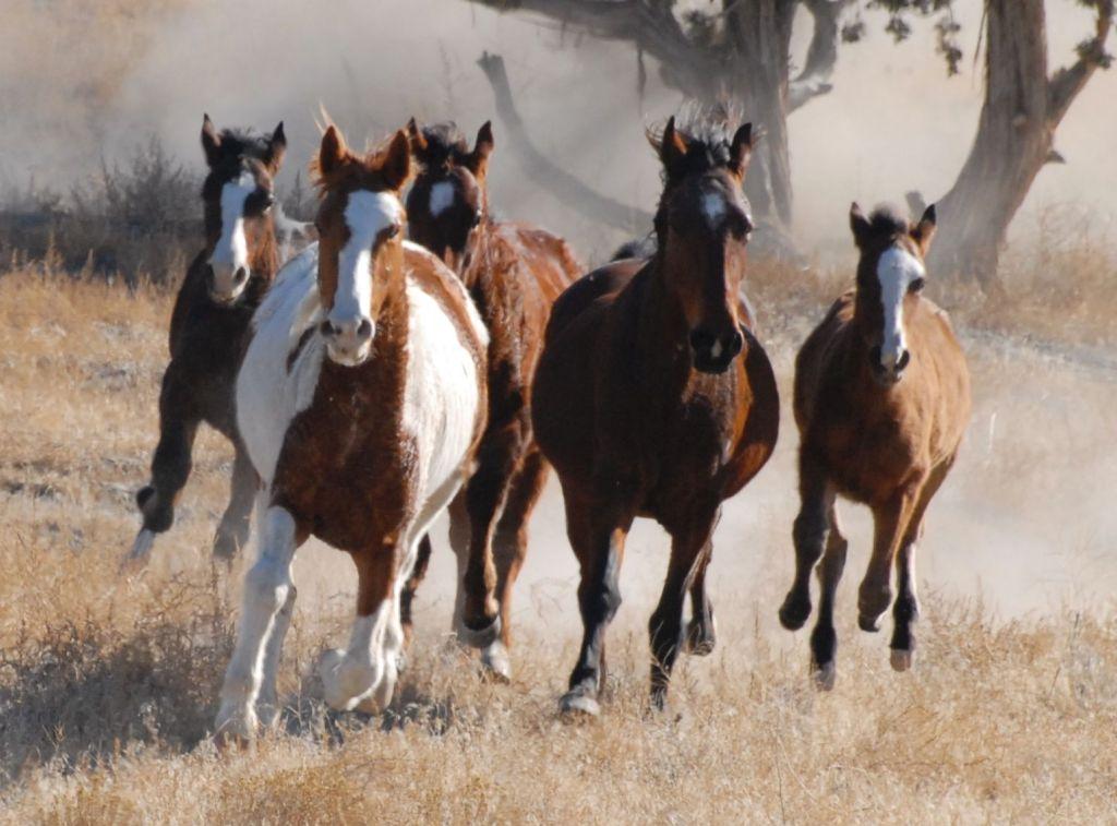 wild_horses_0