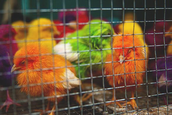 The bird market in Yogyakarta, Java, Indonesia. (Photo: Megan Ahrens/Getty Images)