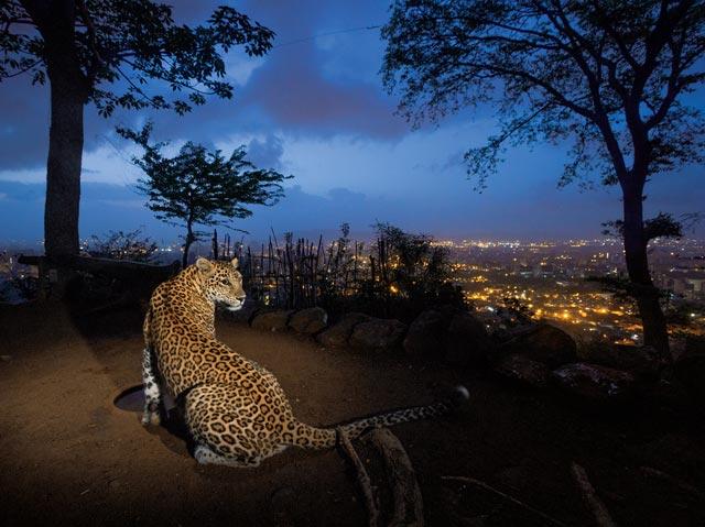 12-leopard-640